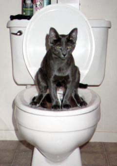 potty.jpg