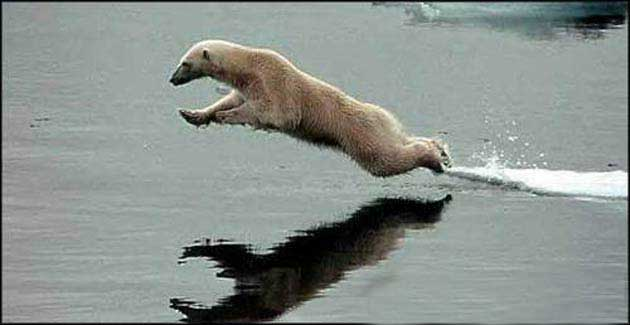 polarbearwatercraft.jpg